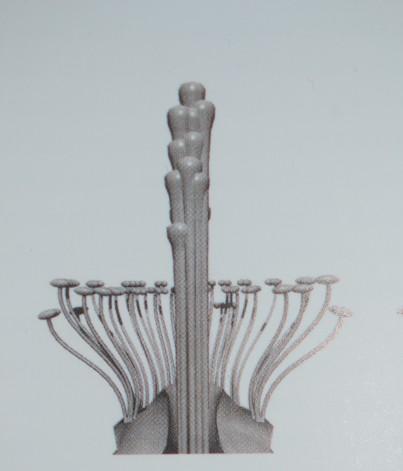 Pistil central de Rosa Moschata par Ivan Louette